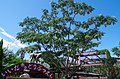 飯田市立動物園のネムノキ A silk tree in Iida City municipal zoo 2014.9.10 - panoramio.jpg