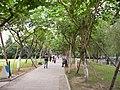 马鞍池公园里的林荫小道 - panoramio.jpg