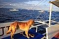필리핀 보홀 돌고래 보러 가는길(Bohol) - panoramio - 우한길(HK Woo).jpg