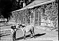 00184 Grand Canyon Historic Grand Canyon Historic Havasupai Village 1938 (6709532309).jpg