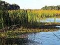04 Bennetts Point RD Green Pond SC 6831 (12397362813).jpg