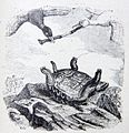 10-3-La-tortue-et-les-deux-canards.jpg
