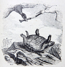 Image illustrative de l'article La Tortue et les Deux Canards