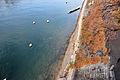 11-11-24-basel-by-ralfr-036.jpg