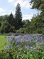 11 Arboretum Kalmthout - Jardin bleu.JPG