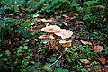 12-10-21 Dreieich Pilze 20.jpg