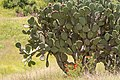 15-07-13-Teotihuacan-RalfR-WMA 0196.jpg