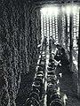 1964-02 1964年 吐鲁番葡萄园晒制葡萄干.jpg