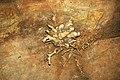 196 Helictites 11 (8317600802).jpg