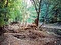 20020908300NR Spechtritz (Rabenau) Hochwasser Rote Weißeritz.jpg