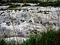 2005-07-26 - United Kingdom - England - Dover - White Cliffs - Flowers 4887514047.jpg