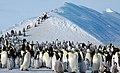 2007 Snow-Hill-Island Luyten-De-Hauwere-Emperor-Penguin-58.jpg