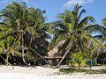 2009 Yucatán beach palms.jpg
