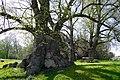 2012-04-28 Mallinden Niederdorla-Thüringen.jpg