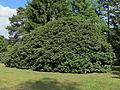 2012-05-15 Rhododendronpark Rathen 3.JPG