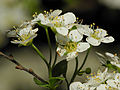 2013-04-29 16-53-50-fleurs-27f.jpg