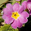 2014-03-10 13-11-43 fleur.jpg