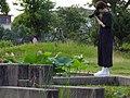 2014-07-01 Hiraike-park (平池公園 大賀ハス)兵庫県加東市東古瀬 8164.jpg
