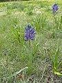 2015.05.05 18.23.03 DSCN2332 - Flickr - andrey zharkikh.jpg
