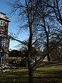 20150312; Memorial tree in the garden of Jezuitenklooster at Tongersestraat.jpg
