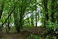 2015 05 24 Deutschland Baden-Württemberg Landkreis Sigmaringen Naturschutzgebiet Zielfinger Vogelsee (20).jpg
