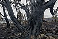 2016 Tasmanian bushfire MG 0160.jpg