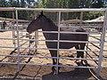2017-07-10 Black Butte Ranch 22.jpg