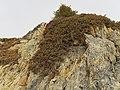 2017.01.27.-58-Paradiski-La Plagne-Champagny-en-Vanoise--Alpen-Wacholder.jpg