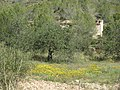 203 Camp vora la caseta de les Rocasses (Vespella de Gaià).jpg