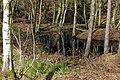25.3.16 Delamere Forest 09 (25431676323).jpg