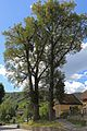 2 Winterlinden in Hohenstein 02 2016-07 NDM KR-077.jpg
