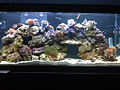 55 Gallon Reef Tank.jpg