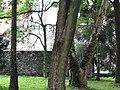 615774 pow krakowski gm Czernichow Czernichow dwor park 16.JPG