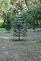 68-218-5013 Миньковецький дендропарк (9).jpg