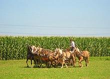 Horsepower - Wikipedia