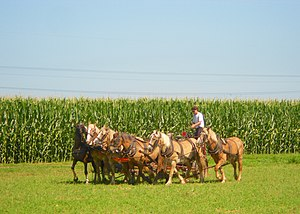 Horsepower - A team of six horses mowing hay in Lancaster County, Pennsylvania