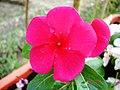 A@a Kyproulas garden42 Askas Cyprus - panoramio.jpg