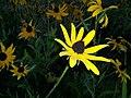 A Flower - Coldwater Spring - Minneapolis, MN - panoramio.jpg