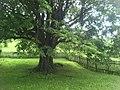 A Nice Garden.jpg