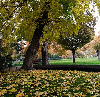 Mellat Park in autumn A fall in Nation Park, Tehran City.JPG