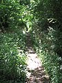 A narrow overgrown path - geograph.org.uk - 1411112.jpg