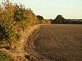 A ploughed field, viewed from Brook Street - geograph.org.uk - 1006641.jpg