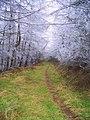 A winter wonderland in Simonside forest - geograph.org.uk - 1125724.jpg