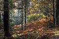 Abbeyford Woods, Devon - panoramio.jpg
