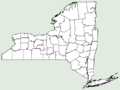 Achillea ligustica NY-dist-map.png