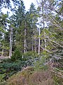 Achnashellach Forest - geograph.org.uk - 1100891.jpg