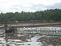 Adat Ombathumuri Paadam Thrissur DSCN0872.JPG