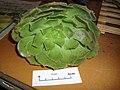 Aeonium arboreum (L.) Webb and Berth. (AM AK296094).jpg