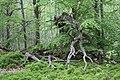 Aesthetically pleasing dead fallen trees.jpg