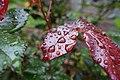 After the rain @ Morning @ Jardin Pierre-Adrien Dalpayrat @ Paris (34344007795).jpg